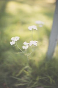 Small white flowers webb IMG_5115