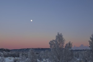 Winter moon webb IMG_8788
